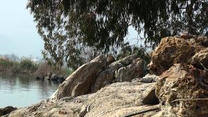 Am See Genezareth vor der Primatskapelle tummeln sich Wüstenmäuse