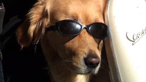 Bund mit Sonnenbrille auf Vespa