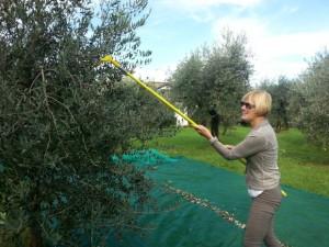 Lydia Ninz am Gardasee bei der Olivenernte