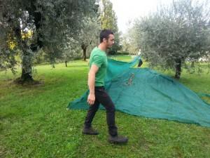 Gardasee: Oliven im Netz
